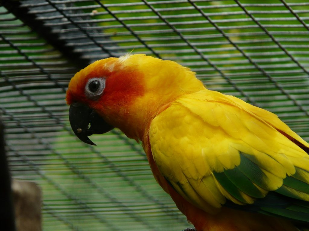 20 Reasons Why Parrots Make Good Pets Parrot Website