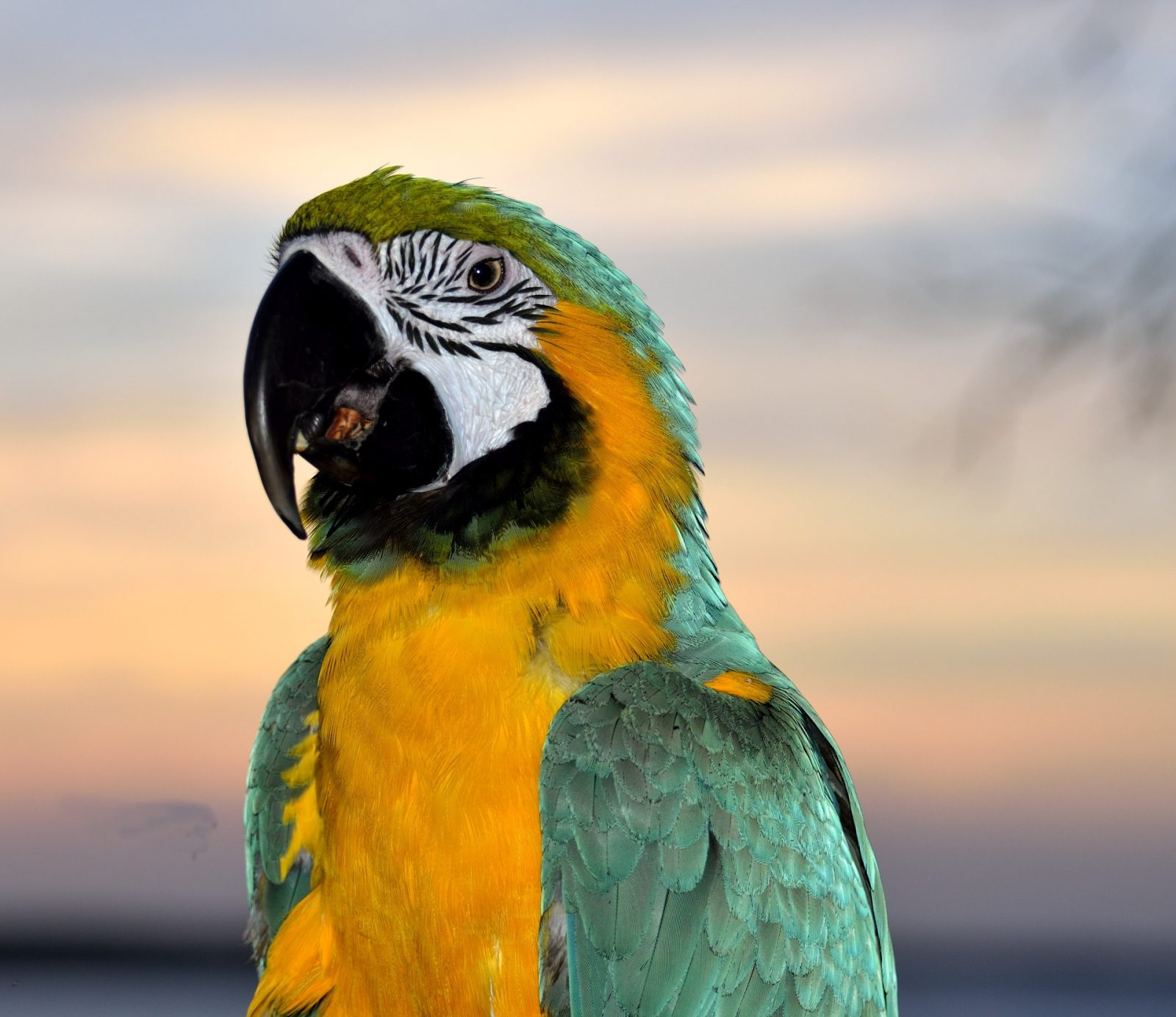 Are Parrots Cold Or Warm Blooded? - Parrot Website